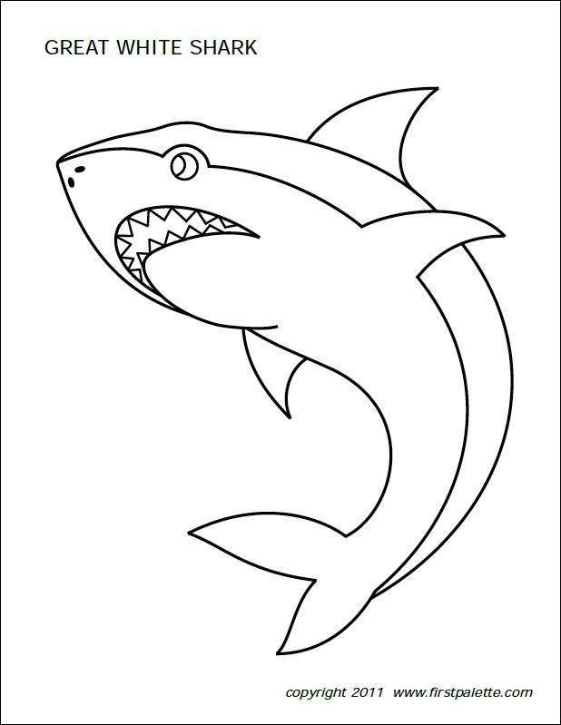 FF First Palette Shark